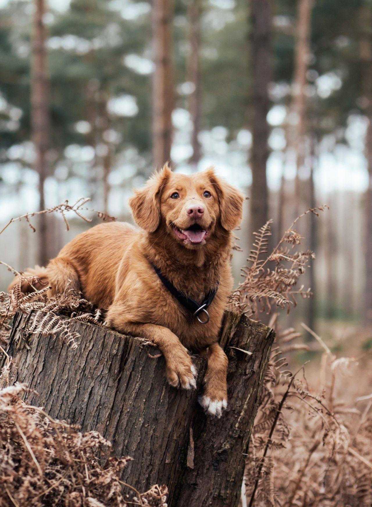 Dierenartsenpraktijk klaver honden