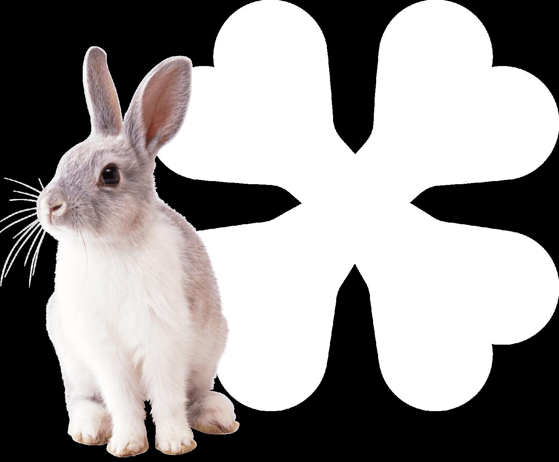 Klaver konijn