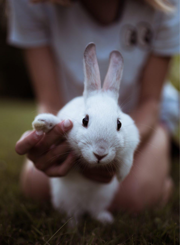 Dierenartsenpraktijk klaver konijnen knaagdieren